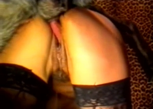 Stockings-clad chick takes dog's big dick